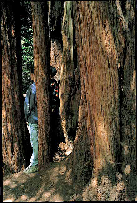 Muir Woods National Monument hiking trails